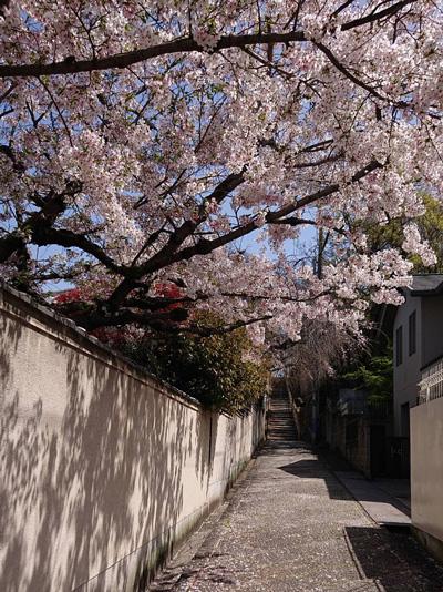 文二郎帽子店ショップブログ 桜